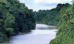 Amazon river tiny landscape
