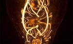 Edison bulb  landscape