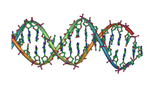Dna double helix horizontal  landscape