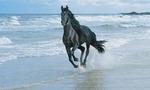 Horse beach  landscape