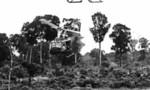 Vietnam%20war  landscape