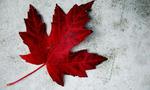 Canada day  landscape