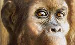 Australopithecus.afarensis.j  landscape