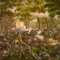 800px-battle_of_the_wilderness_small_square