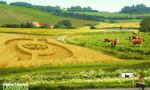 Landbrugsbillede  landscape