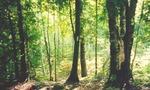 Btmapleforestwasagabluffs02  landscape
