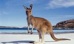 Kangaroo 8  landscape