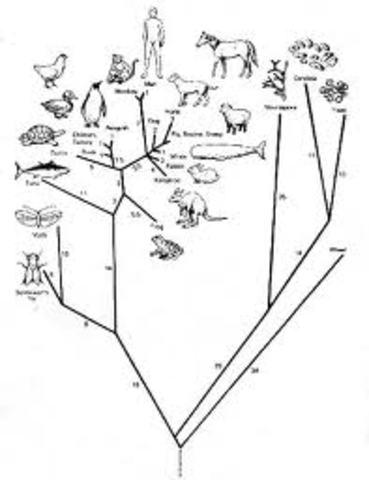 Key Player's Contribution to Evolution timeline