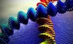 Effetti ogm effetti involontari ogm ingegneria genetica organismi geneticamente modificati 13  landscape