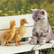 Cute-wallpapers-cute-kittens-10501750-1024-768_small_square