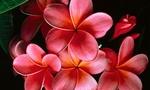 Flores rojas 643277 596457  landscape
