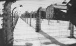 Auschwitz  landscape