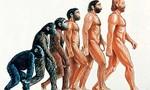 Evolucion1  landscape