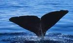 Whale  landscape