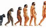 Evolucion%20del%20hombre  landscape