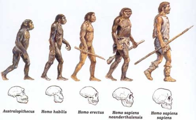the main physical and social characteristics of the homo habilis Homo erectus was an ancient human ancestor that lived between 2 million and 100,000 years ago it had a larger body and bigger brain than earlier human ancestors.