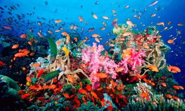 Fish Live In Sea Essay