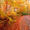 Fall_small_square