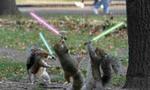 Jedi squirrels  landscape