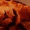 Aslan banner