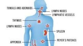 Immune systen