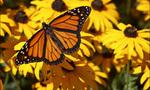 Butterfly yellow flowers 01  landscape