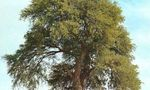 090531 mezquite  landscape